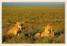 KENYA   MASAI MARA:   LEONI SELVAGGI NEL PARCO   (NUOVA CON DESCRIZIONE DEL SITO SUL RETRO) - Kenia