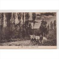 LRDTP8176-LFTD3318.Tarjeta Postal De Lerida.Arboles,campo.AGRICULTOR.arando Con Yunta De Bueyes.SEO DE URGEL.Lerida - Lérida