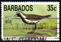 "BARBADOS 1994 ""Hong Kong '94"" Int Stamp Exhibition. Migratory Birds - 35c. - Pacific Golden Plover  AVU - Barbados (1966-...)"
