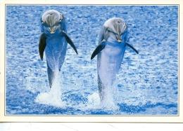 Dauphin - Antibes : Marineland - Les Dauphins - N° 176549 éd Marcou - Dauphins