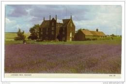 Heacham Lavender Field - Angleterre