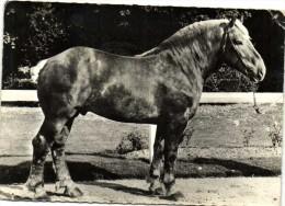 CHEVAL  FRANCE  BOULONNAIS  Recto Verso Pub Soufrane - Horses