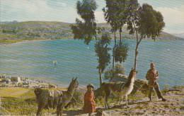 BOLIVIA - Lake Titicaca - Bolivie
