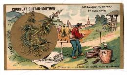 Chromo - Chocolat Guérin- Boutron - Botanique Illustrée - Le Chanvre - La Toile, Les Cordes, Huile De Chènevis - Guérin-Boutron