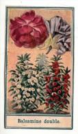 Chromo - Bon Point - F. Nathan - Balsamine Double (fleur) - Chromos