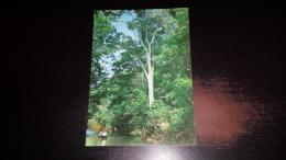 C-32847 MANAUS IGAPO AWAMPLAND - Manaus