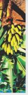 (511) MARQUE-PAGE . BOOKMARK. SIGNET  ++   BANANAS - Marcapáginas