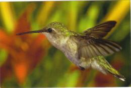 COLIBRI / HUMMINGBIRD / KOLIBRI - Birds