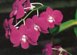 ORCHIDEE CARTE POSTALE - Cultures