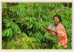 COMORE  MAYOTTE:  RACCOLTA DI FIORI D'YLANG-YLANG     (NUOVA CON DESCRIZIONE DEL SITO SUL RETRO) - Comorre