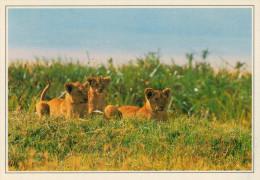 TANZANIA  SERENGETI:  PARCO NAZIONALE       (NUOVA CON DESCRIZIONE DEL SITO SUL RETRO) - Tanzania