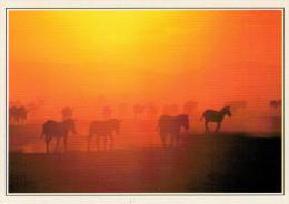 KENYA  MASAI-MARA:  ANIMALI NEL TRAMONTO   (NUOVA CON DESCRIZIONE DEL SITO SUL RETRO) - Kenia