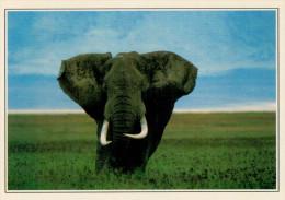 KENYA  MASAI-MARA:  ELEFANTE NELLA RICERVA      (NUOVA CON DESCRIZIONE DEL SITO SUL RETRO) - Kenia