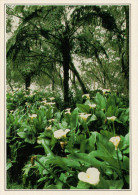 LA REUNIONE    FIORI DI ARO  BIANCHI    (NUOVA CON DESCRIZIONE DEL SITO SUL RETRO) - Réunion