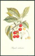 Reader's Digest Frutta Fuit Serie 6 Cartoline Numerate Nuove In Carnet -Fiog94 - Fiori, Piante & Alberi