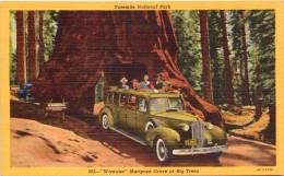 Yosemite National Park - Wawona - Mariposa Grove Of Big Trees - Carte Toilée - Yosemite