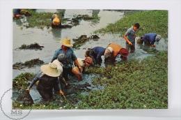 Thailand Postcard - Thai - Farmers After Harvest At Their Leisure - Farms In Thailand - Tailandia