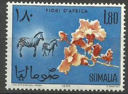 Somalia - 1965 Begonia & Zebras 1s80  MNH **        SG 435  Sc 286 - Somalia (1960-...)