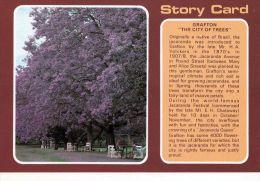 "1 AK Australien * Story Card - Grafton ""The City Of Trees"" - Australie"