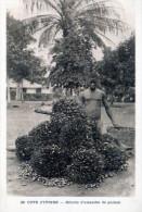Cote D'Ivoire. Recolte D'amandes De Palmes - Costa D'Avorio