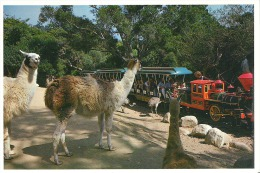 SBS-018 Train Ride - Santa Barbara Zoological Gardens Visitors also view Animal displays