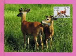 White-tailed Deer WWF Fdc Pmk 1992 Nederlanndse Antillen Animals Animaux Faune Carte Maximum Card Maxicard Mc71 - Stamps