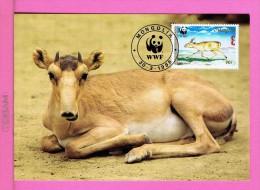 Saiga WWF Fdc Pmk 1995 MONGOLIA Animals Animaux Faune Carte Maximum Card Maxicard Mc34 - Mongolia