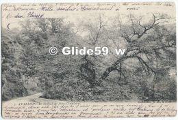AVALLON - Le Tilleul Du Pont-Claireaux - N° 7 - Avallon