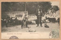 Bagnères De Luchon -- Berger Luchonnais - Voyagée 1908 - BERGER - MOUTON - ANE - Luchon