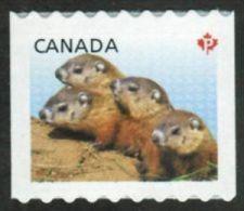 CANADA, 2013, 2604  BABY WILDLIFE: WOODCHUCKS   MNH Single - Roulettes