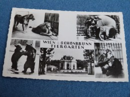 ZOO  SCHONBRUNN .WIEN .VIENNE. - Château De Schönbrunn