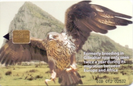 GIBRALTAR PHONECARD BIRD/EAGLE -GIB-C12 , 5000pcs-1/00 - Arenden & Roofvogels