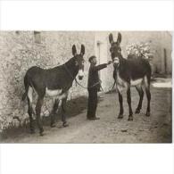 COSTP0632C-LFTP3594TAB.Spain. Espagne.Tarjeta Postal Costumbrista.BURROS.MALLORCA - Burros
