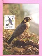 Falco Pelegrinus Falcon Wanderfalke Birds Oiseaux Aigles 1984 FRANCE Animals Animaux Carte Maximum Card Maxicard Cm134 - Eagles & Birds Of Prey