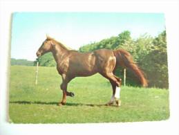 CAVALLO  DA CORSA   CHEVAL  COURSE   VIAGGIATA COME DA FOTO  FORMATO GRANDE - Horses