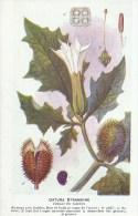 SANTE - PLANTES MEDICINALES - Laboratoire Fumouze - Illustrateur H. FRANTZ - Dos : Utilisation - Datura Stramoine - Salute