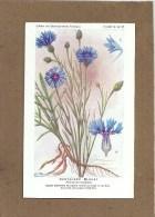 SANTE - PLANTES MEDICINALES - Laboratoire Fumouze - Illustrateur H. FRANTZ - Dos : Utilisation - Centaurée Bleuet - Salute