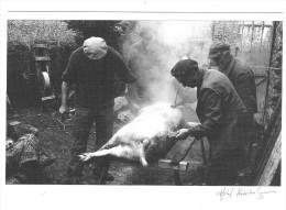 Grattage Des Soies Du Cochon Après La Tuade Dans Les Cévennes CPM Krackenberger - France