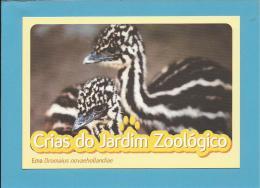 Ema ( Dromaius Novaehollandiae ) - Crias Do Jardim Zoológico - Lisbon ZOO Lisboa - Portugal - Oiseaux
