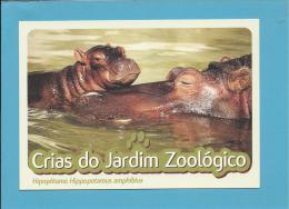 Hipopótamo ( Hippopotamus Amphibius ) Hippo - Crias Do Jardim Zoológico - Lisbon ZOO Lisboa - Portugal - Hippopotames