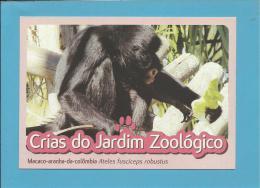 Macaco-aranha-da-colômbia (Ateles Fusciceps Robustus ) Monkey - Crias Do Jardim Zoológico - Lisbon ZOO Lisboa - Portugal - Singes