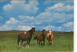 Chevaux.. Cheval.. Prairie.. Champ.. Hippisme.. élevage - Pferde