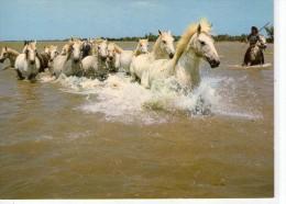 Chevaux.. Cheval.. En Camargue.. Manade De Chevaux.. Gardian à Cheval - Horses