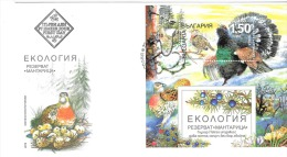 Tetra, Western Capercaille, Bulgarie, Bulgaria, Tétrao Urogallus - Gallinacées & Faisans