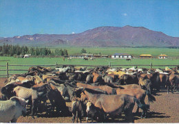 Mongolia - Hubsubul Aimak - Village Community Centre - Horses - Mongolie