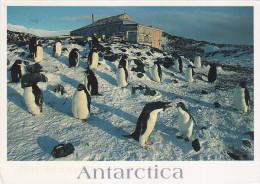 Italian Scientific Expedition Cape Royds Antarctica - Penguin Colony - Climbing