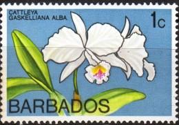 Barbados - Fiori (nuovo) - Barbados (1966-...)