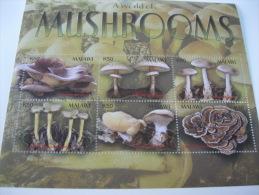 Malawi-Mushrooms - Champignons