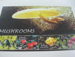 Maldives-Mushrooms - Champignons