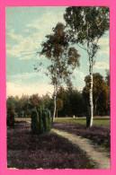 Lüneburger Heide - Birken Am Wege In Deil - 1917 - Lüneburger Heide